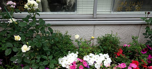 店店舗花壇