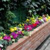 美容室の花々