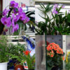 美容室店内の花