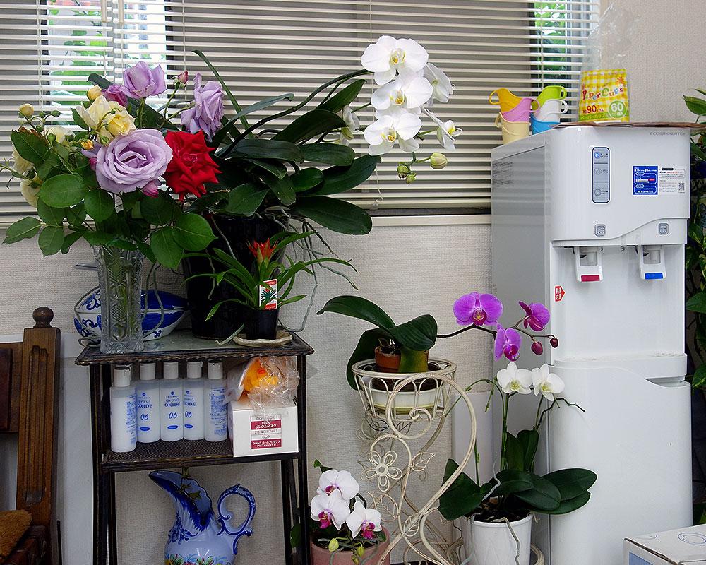 2016年、美容室の花