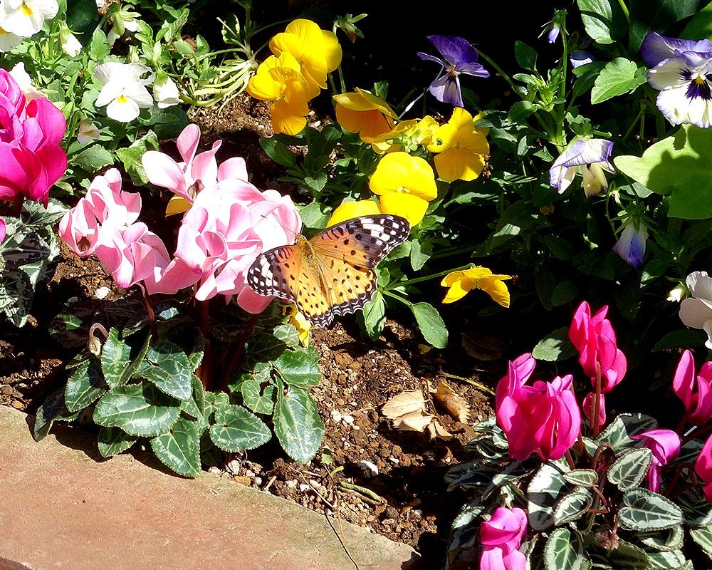美容室に蝶が