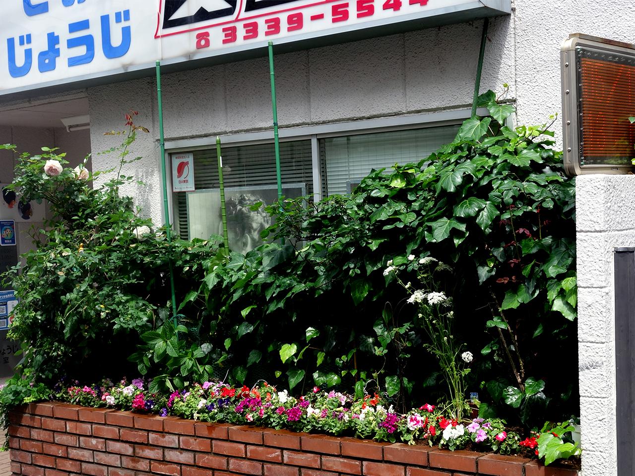 美容室の花の植え替え