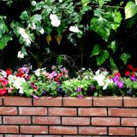 サロン花壇の植え替え