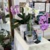 高円寺駅近美容室のアマリリスと胡蝶蘭