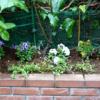 高円寺駅近美容室高円寺の花壇